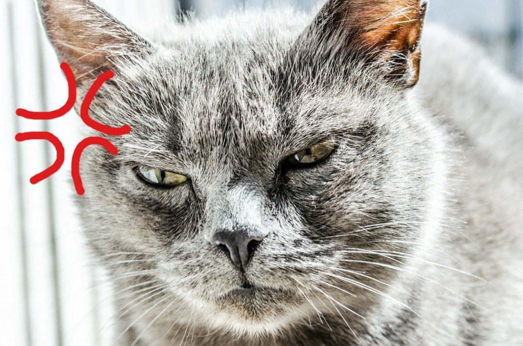 angrycat